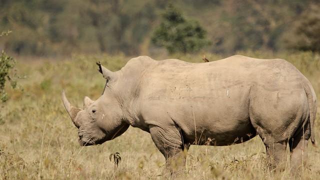 Rhino in Lake Nakuru Park  by Kandukuru Nagarjun