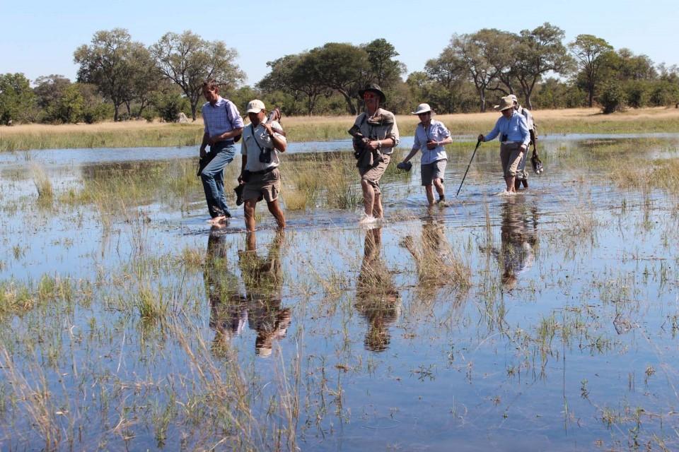 Walking Safari in the Delta