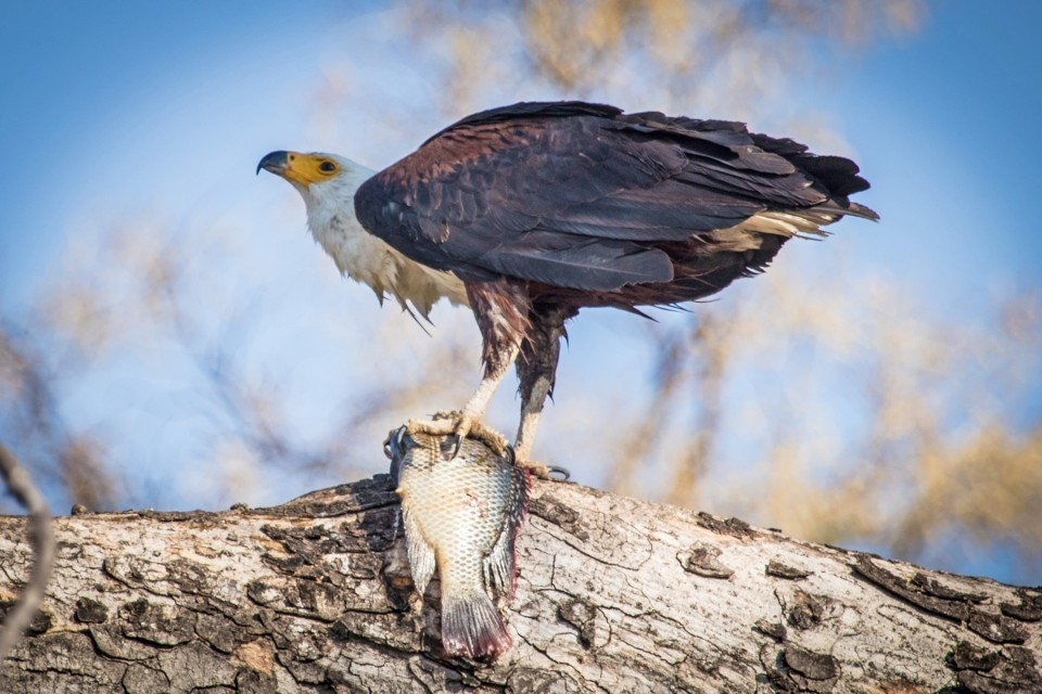Birdlife in the Delta