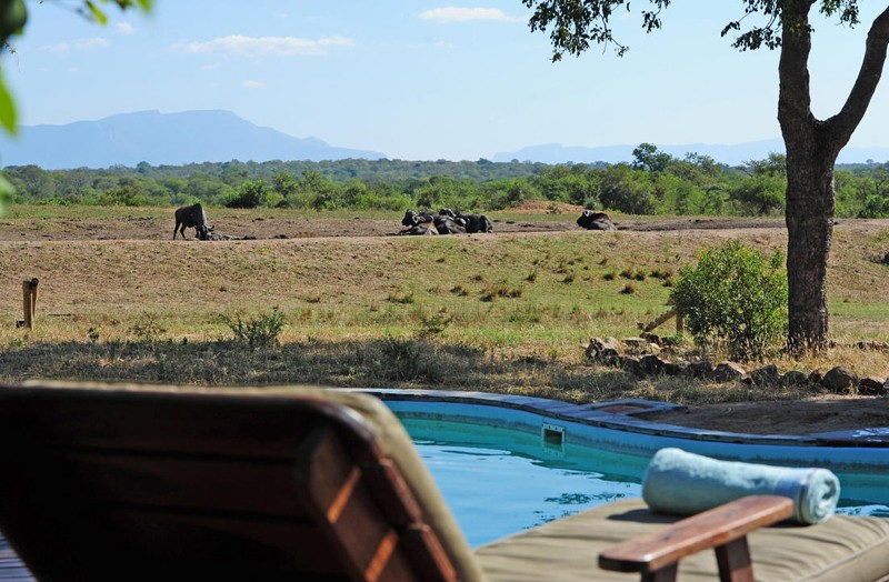 Thornybush lodge wildlife