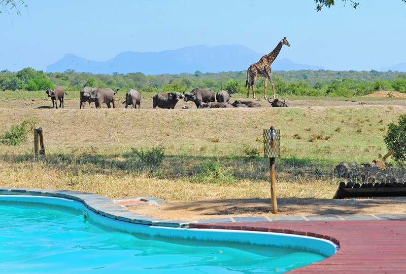 Lodge wildlife pool