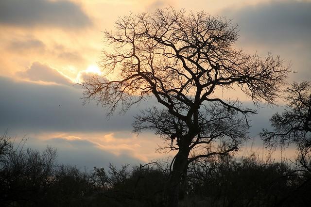 Kruger Park  by Flowcomm
