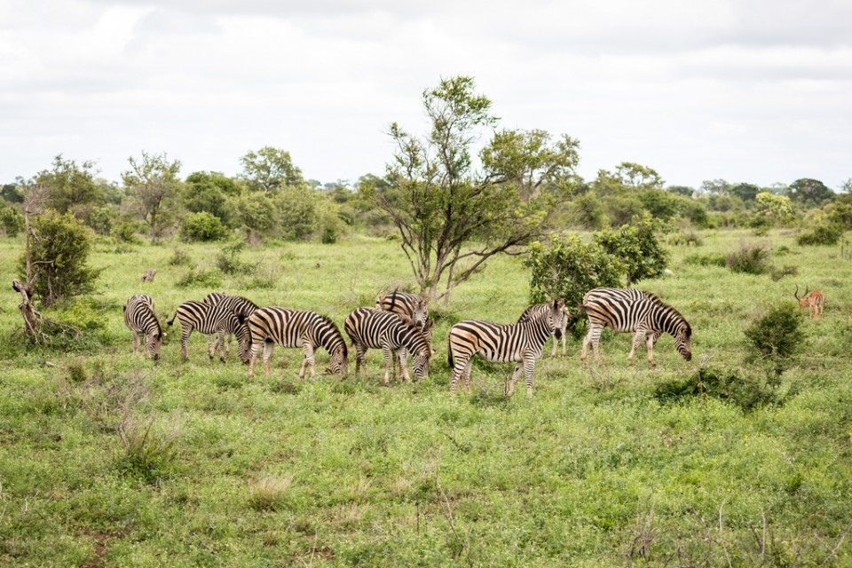 Kruger wildlife  by Allison McCarthy