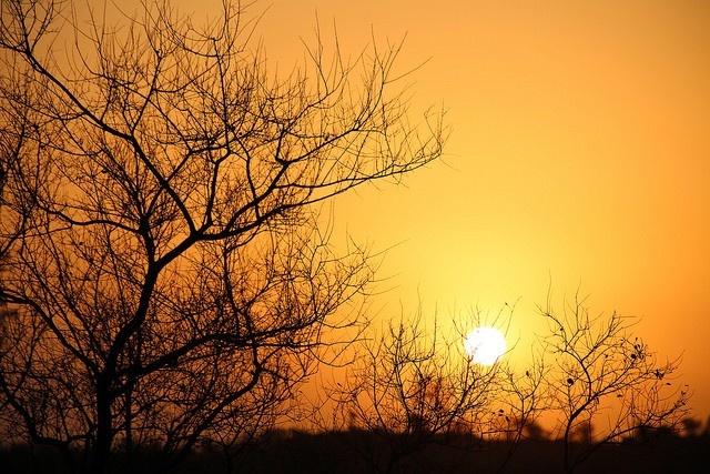 Sunset in Kruger  by Flowcomm