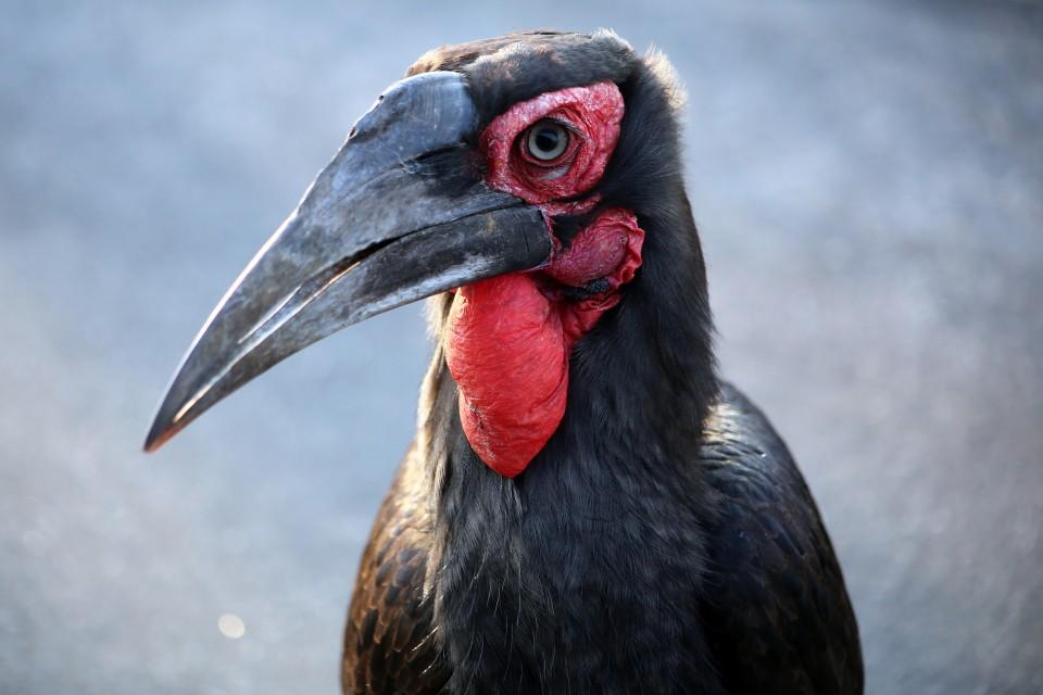 Birdlife in Kruger  by Flowcomm