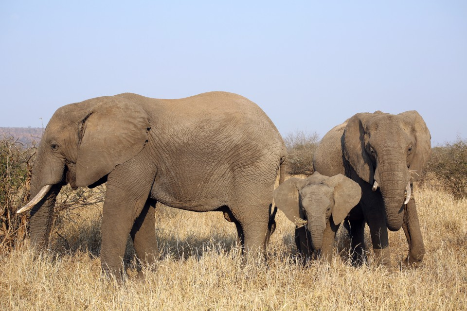 Elephant family in Kruger  by Flowcomm