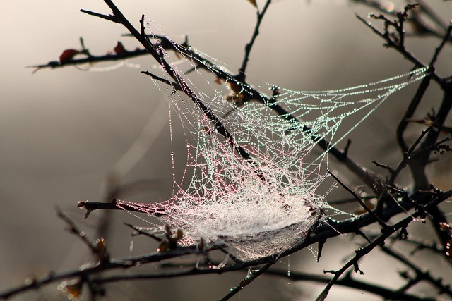 Spider's web  by Flowcomm