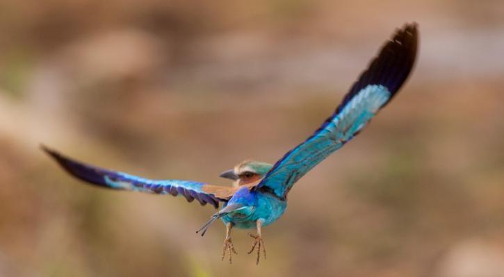 Birdlife in Kruger