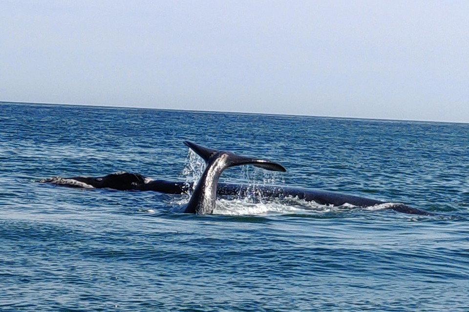 Whales in Hermanus  by Lydia Pintscher