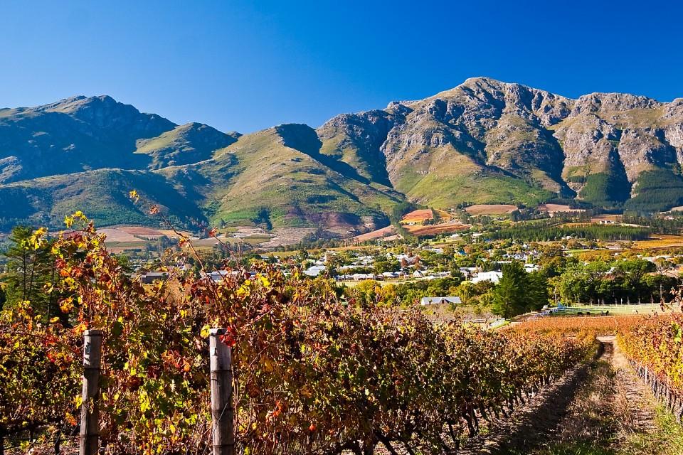 Stellenbosch vineyards  by John Hickey-Fry