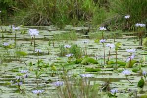iSimangaliso Wetland Park by Bernard DUPONT
