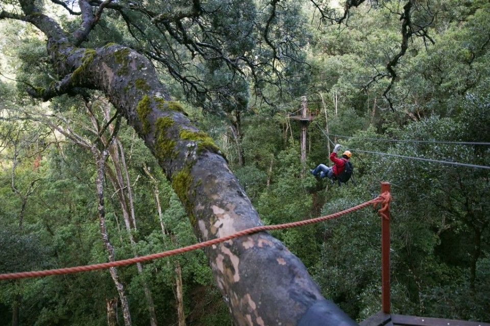 Tsitsikamma canopy treetop tour  by South African Tourism