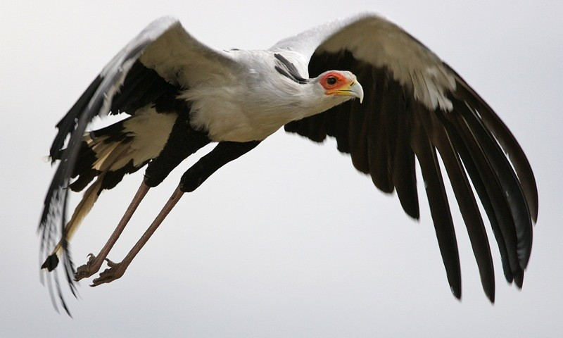 Secretary Bird  by Lip Kee