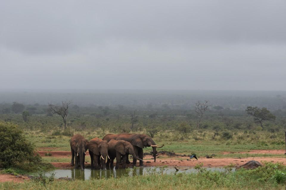 Elephant in Tsavo