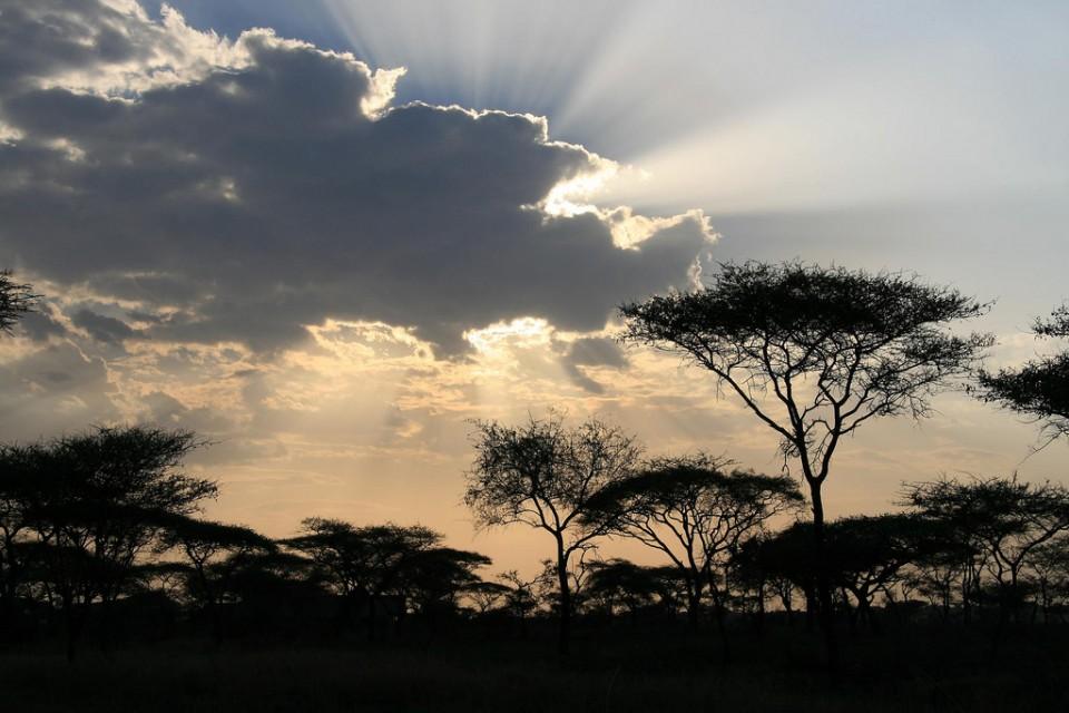 The Serengeti  by Marc Veraart