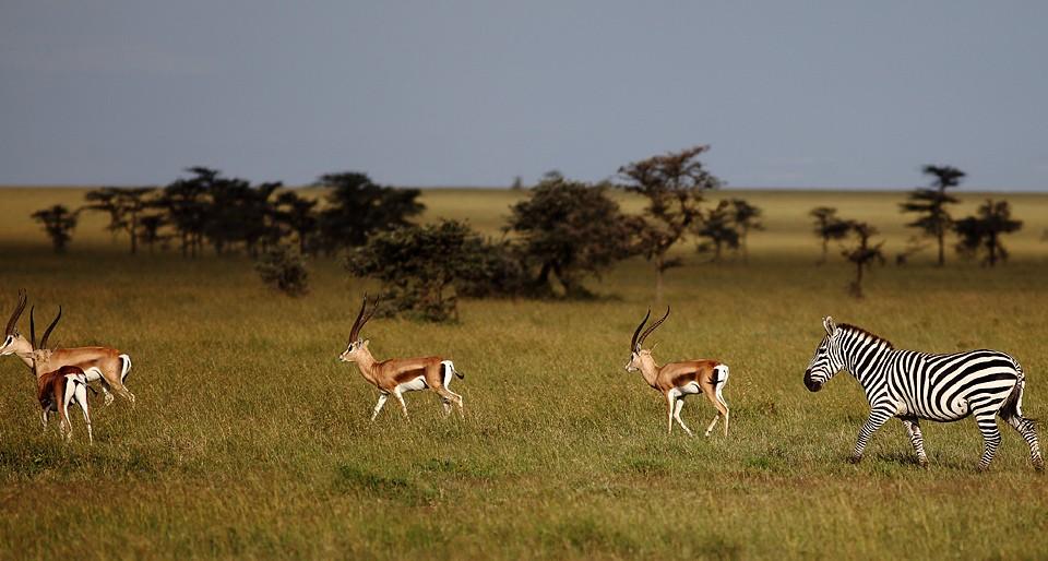 Kenyan Plains  by Achmin