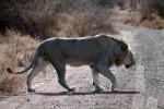 3 Day Budget Kruger Park Safari - Backpackers Tour