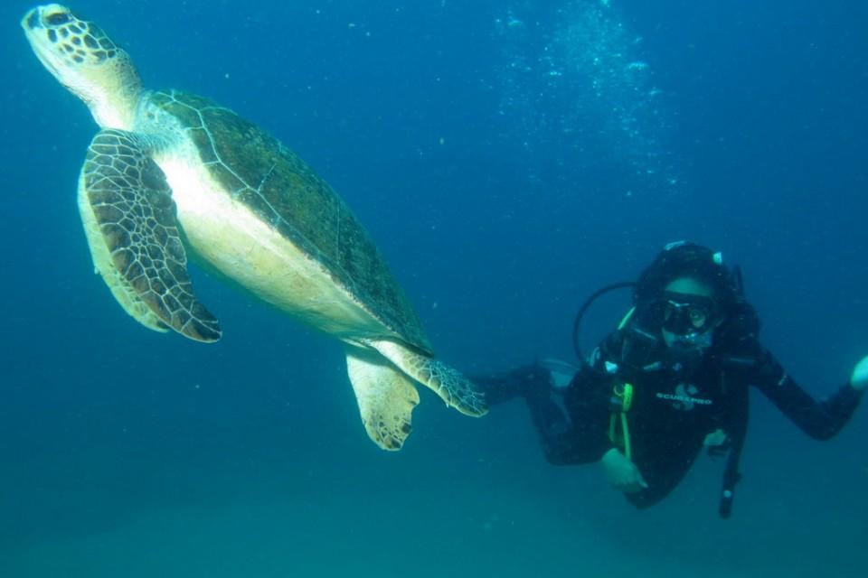 Diving, Mozambique  by Derek Keats
