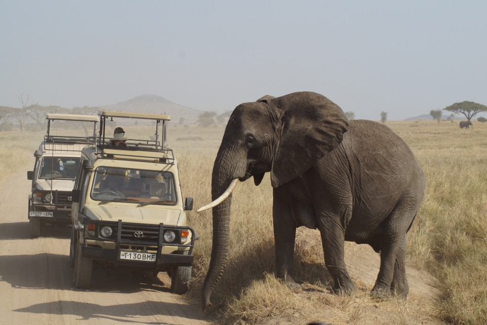 Serengeti game drive