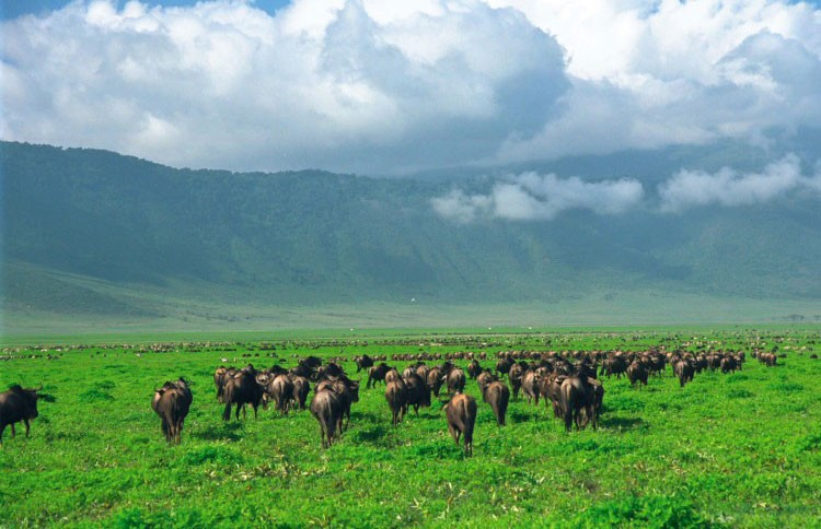 Ngorongoro Crater and wildlife