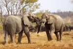 3 Day Kruger Park Exclusive Lodge Safari