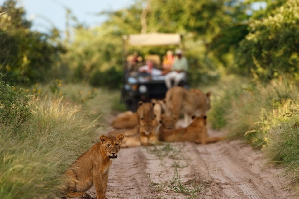 Kalahari game drive