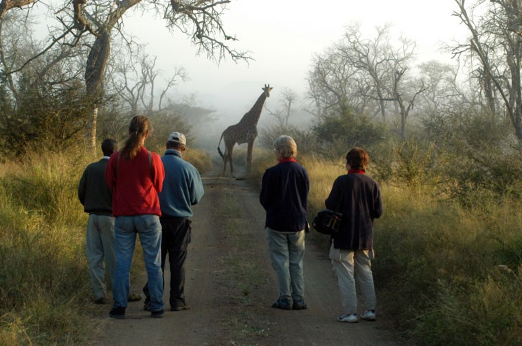 Swaziland bush walk