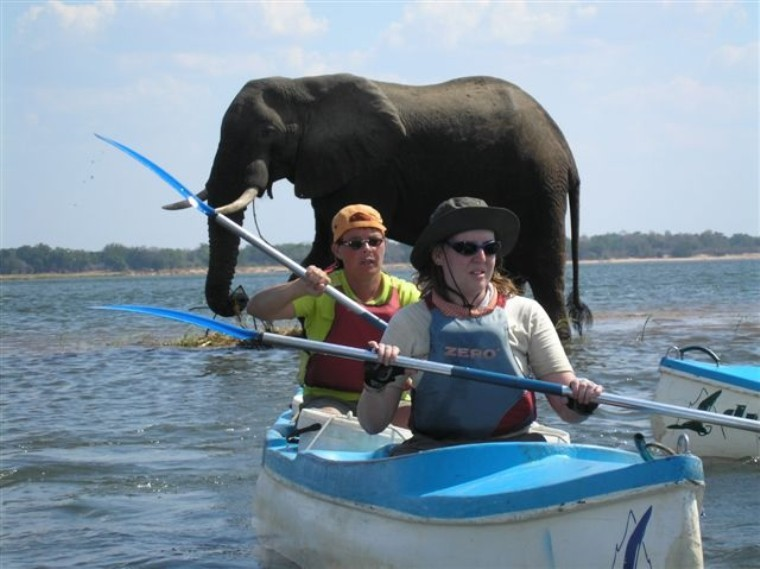 Canoeing past elephant