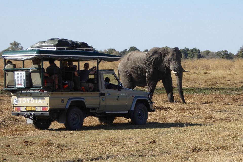 Game drive elephant