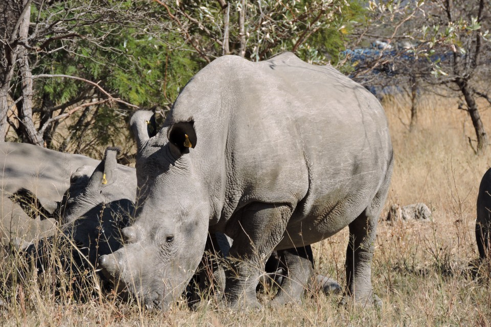 Matobo rhinos  by Mike