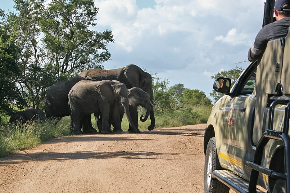 Vehicle and elephants in Kruger