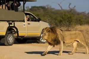 Kruger lion vehicle