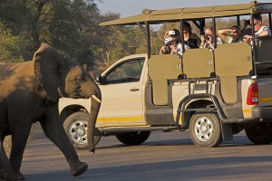 Vehicle and young elephant