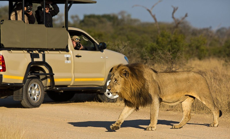 Kruger lion vehicle