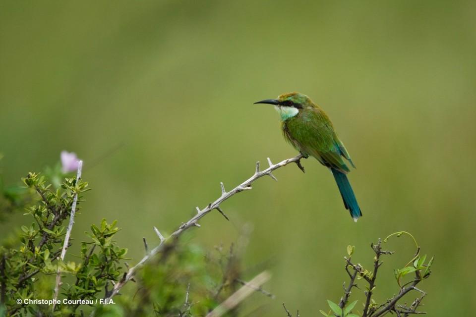 Kalahari birdlife