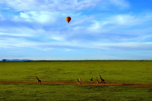 Mara balloon giraffes-2 by Wajahat Mahmood
