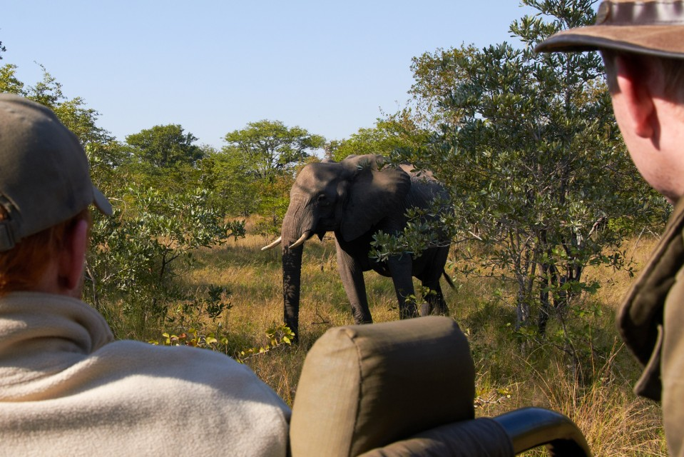 Game drive elephant
