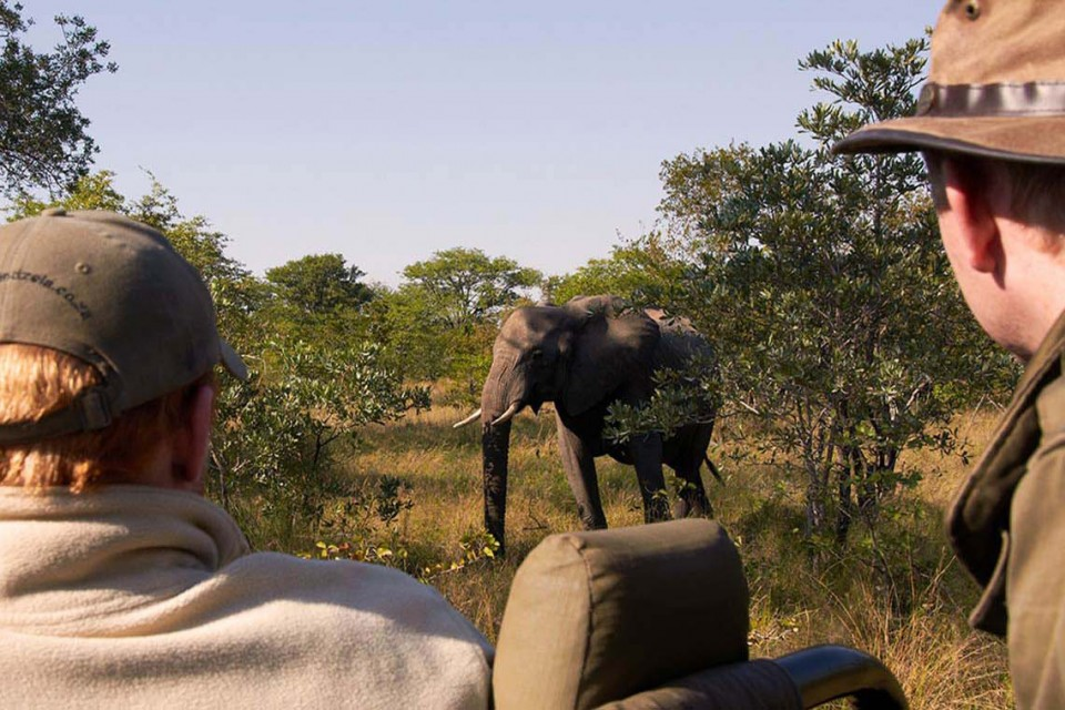 Gamedrive-shindzela-tented-safari-camp