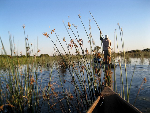 Okavango Delta  by Athena Lao