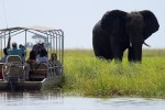 Elephent on a chobe river cruise2
