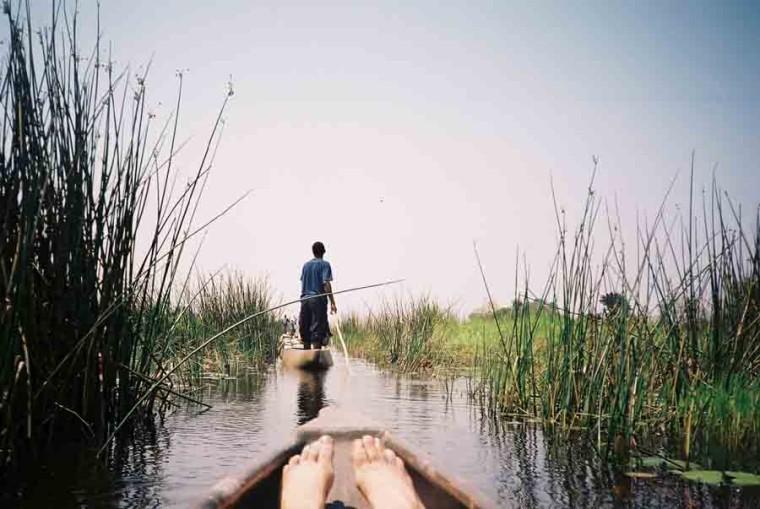 Botswana Delta Image