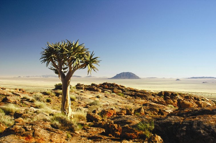 Quiver Tree Image Namibia