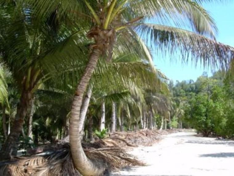 Nosy Be Island Image