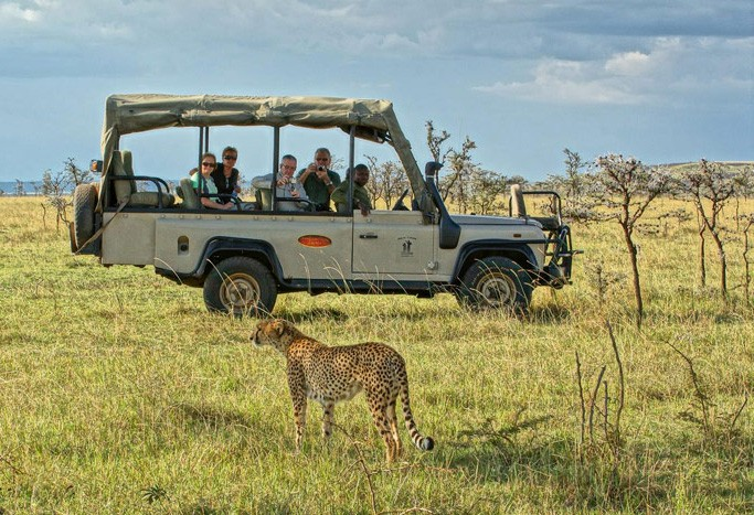 Game drive cheetah