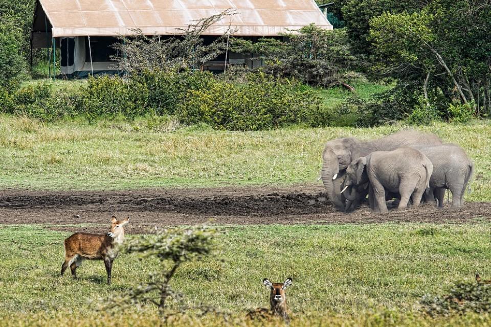 Porini rhino camp animals