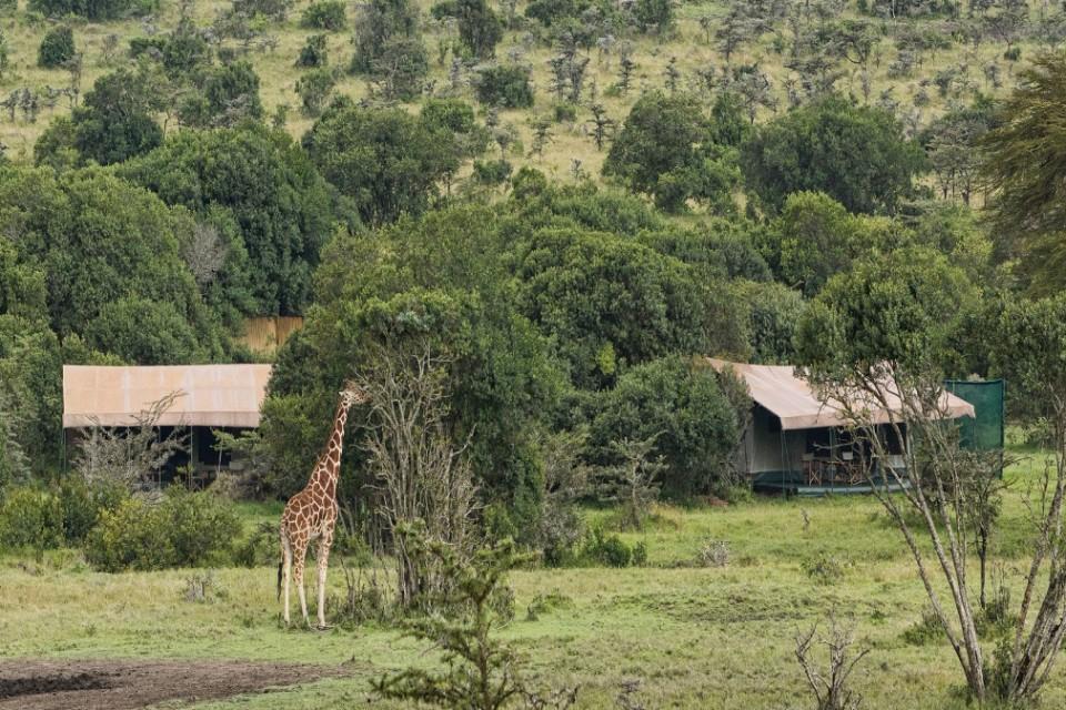 Porini rhino giraffe
