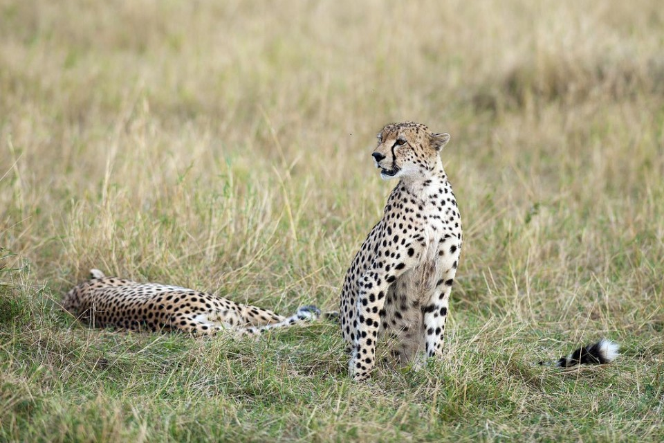 Masai Mara  by Christopher Michel