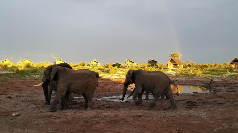 Elephant waterhole