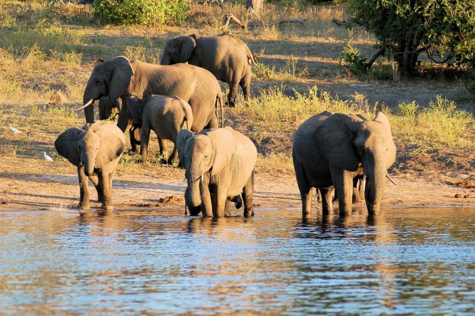 Chobe elephants  by Joachim Huber