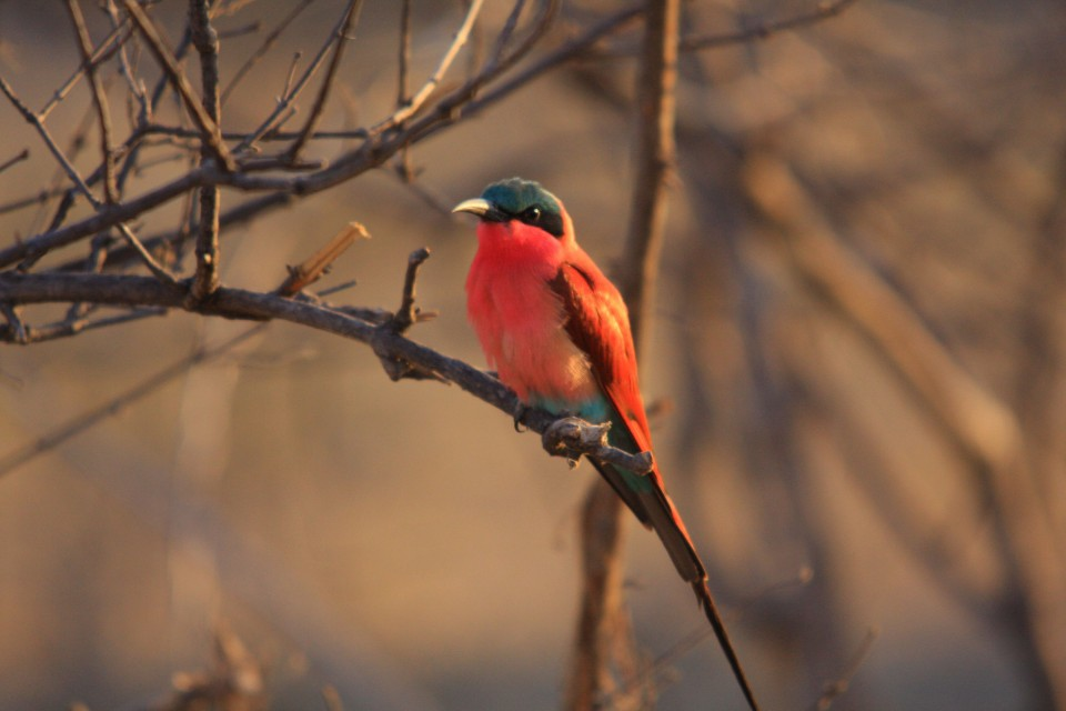 Chobe birdlife
